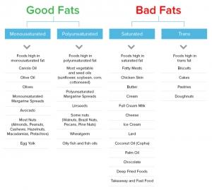 Good Vs Bad Fat Model