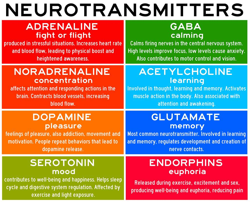 Neurotransmitters - Heal n Cure - Dr. Meena