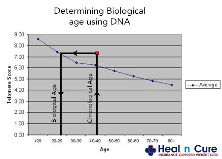 Telomere sample graph depicting biological age VS. chronological age